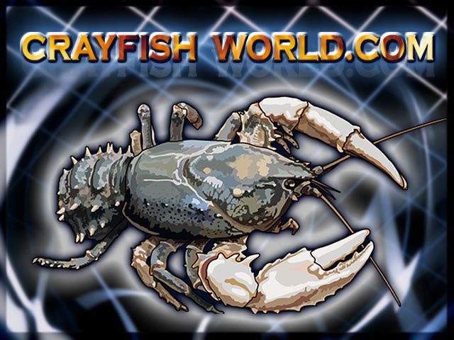 crayfishworld04.jpg
